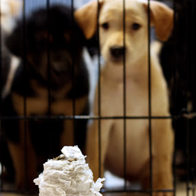 Tissue roll vs 9 Puppies by Andy Kow - Animals Other ( canon, animals, dogs, pet, pets, puppy, 450d )