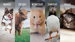 Monday Through Friday - Zoom Background item