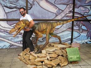 Photo: raptor wrangling at the Darwin Museum
