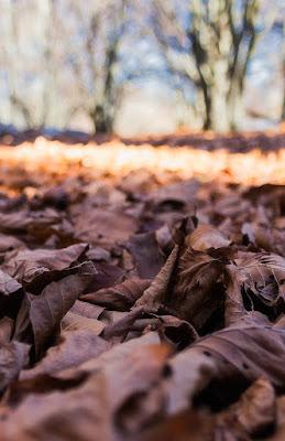tappeto di foglie di Franz78
