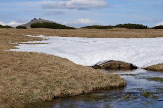 Photo: Sněžka od Úpského rašeliniště