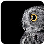 Owl Wallpaper - Best Cool Owl Wallpapers icon