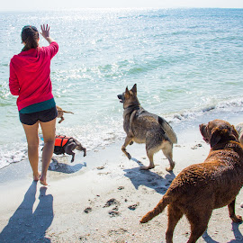 throw by Meaghan Browning - Animals - Dogs Playing ( water, throw, girl, dogs, beach, group, variety )