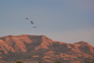 Photo: Squadron of sandhills circling for a landing