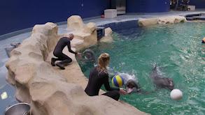Dolphin Doctor thumbnail