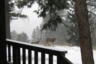 Photo: Our Deer Friends