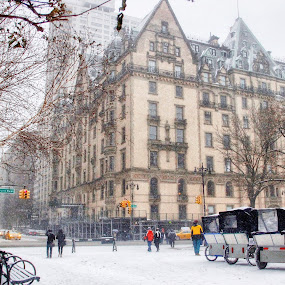 Snow day  by Aurelio Firmo - Buildings & Architecture Public & Historical ( snow, new york )