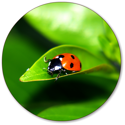 Ladybug Wallpapers Aplikacije Na Google Playu