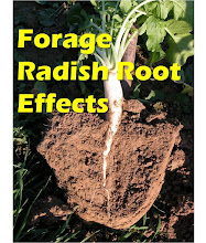 Photo: THE FOLLOWING SLIDES ILLUSTRATE SOME ASPECTS OF FORAGE RADISH ROOT EFFECTS ON SOIL PROPERTIES.