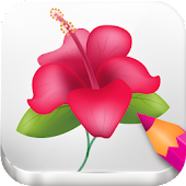 Draw Flowers with Sketch