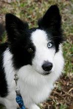 Photo: one brown eye, one blue eye, all beautiful