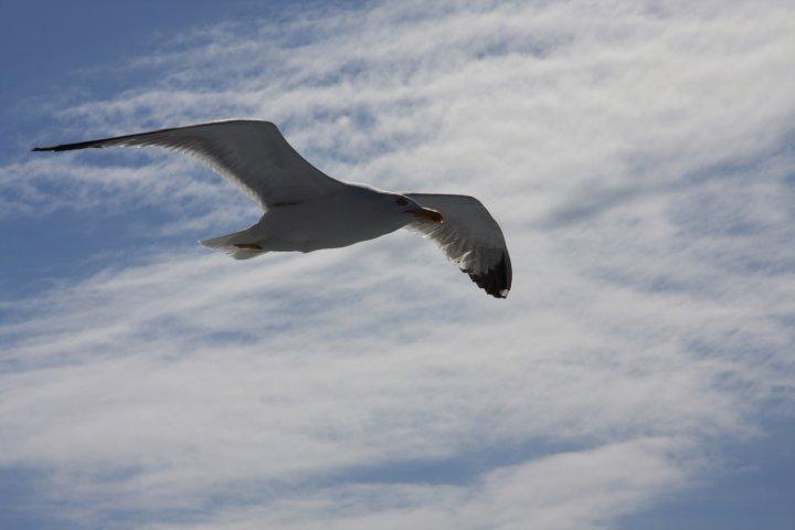 Libero nel vento... di BMB
