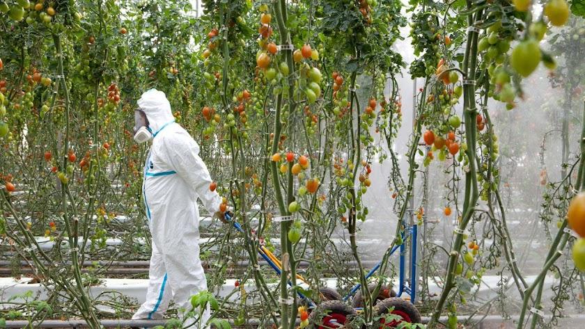 Las claves agrícolas del futuro pasan por una menor dependencia de plaguicidas.