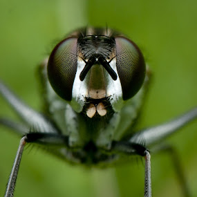 by Pacu Jue - Animals Insects & Spiders