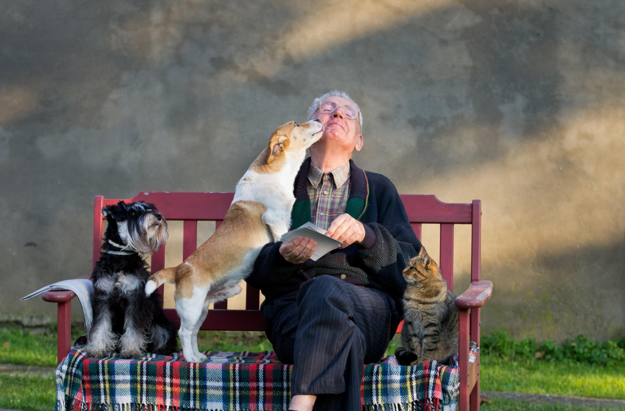 senior citizens and cat adoption