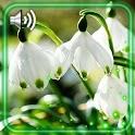 Spring Snowdrops Live Wallpapar icon