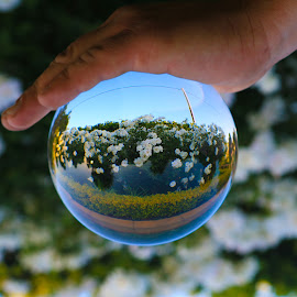 Hand Held  by Stefan Klein - Artistic Objects Glass ( glass, flowers, refraction, crystal, garden )