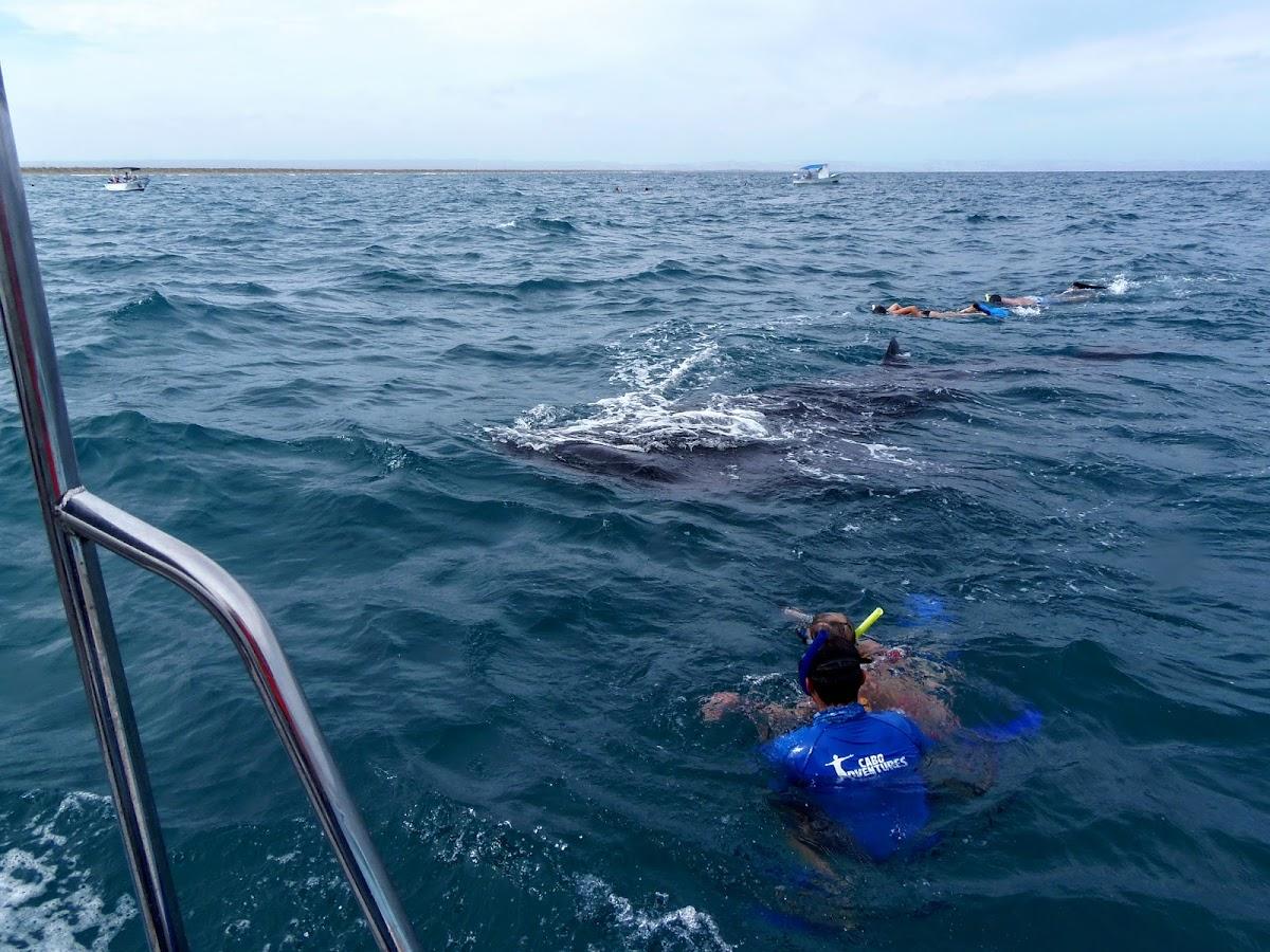 Dans l'eau, plongée en apnée à la baleine