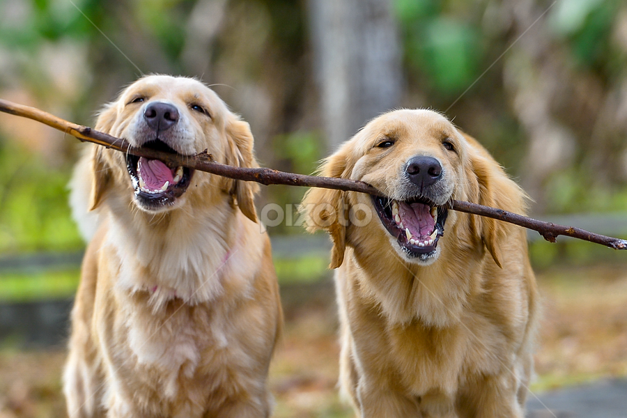 Friends for Life by Dave Lerio - Animals - Dogs Playing
