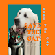 Download Save the CAT - make your rules For PC Windows and Mac