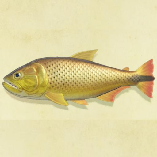 あつ 森魚 6 月