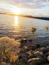 Photo: Elderflowers overlooking a beautiful, bright sunset on a lake at Eastwood Park in Dayton, Ohio.