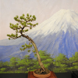 Bonsai by Patrizia Emiliani - Nature Up Close Trees & Bushes ( bonsai,  )