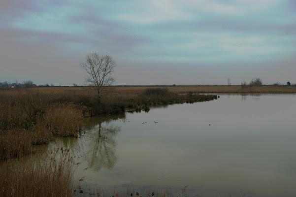 Silenzio in laguna di danilo56