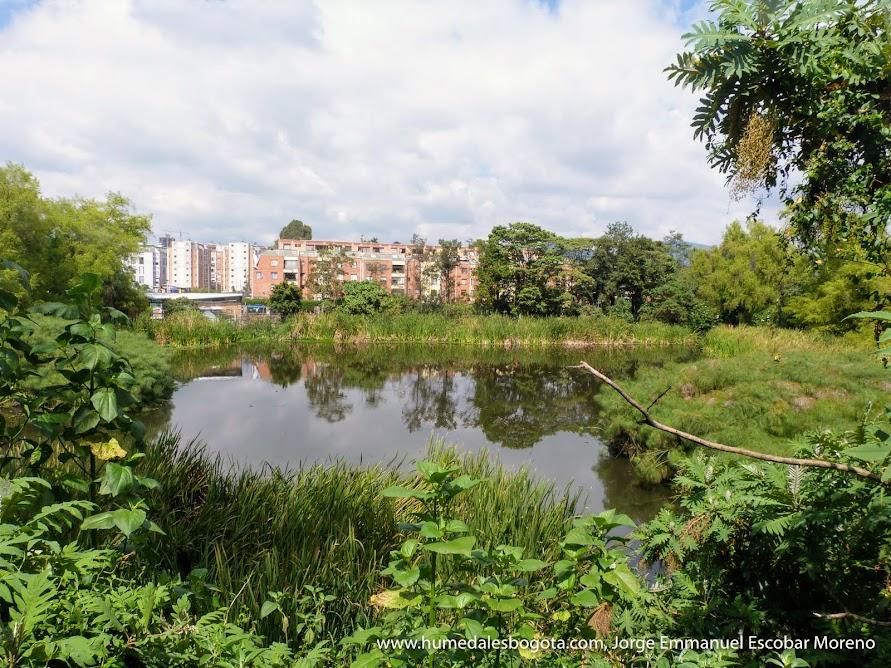 Humedal Colegio San jorge de Inglaterra