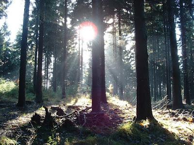 Brotterode: Zum Ende der Wanderung kam sogar die Sonne heraus.
