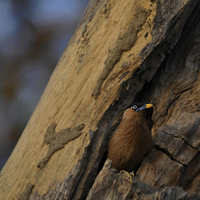home sweet home by Ashutosh Singhvi - Novices Only Wildlife ( bird nest )