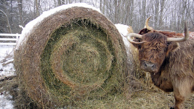 Photo: Hay bale cirlces