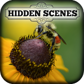 Hidden Scenes - My Little Bees