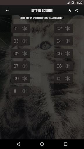 小猫的声音