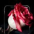 ✿ HD Flowers Wallpaper - 4K Beautiful Flowers APK