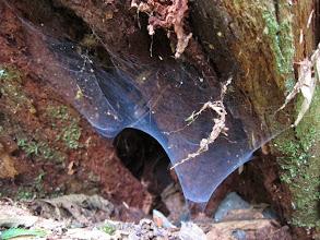 Photo: Cool spiderweb.