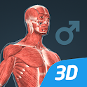 Human body (male) educational VR 3D icon