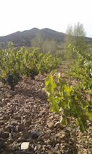 Photo: El verdadero vino de las piedras y no el de Cariñena...  (Fotografía y titulo enviado por Javier Lopez Guillen)