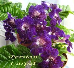 Photo: Persian Carpet