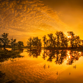 Golden Morning by Adrian Campfield - Landscapes Sunsets & Sunrises ( clouds, flooding, water, orange, woodlands, patterns, white, lakes, reflections, yellow, shadows, dawn, red, wetlands, amber, silhouettes, trees, sunrise, gold, black,  )
