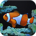 Tropical Fish Puzzle Games icon