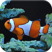 Tropical Fish Puzzle Games