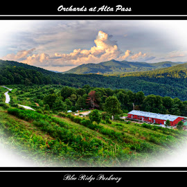 Orchards at Alta Pass by Steven Faucette - Typography Captioned Photos ( mountains, apple, orchard, blue ridge parkway, north carolina )