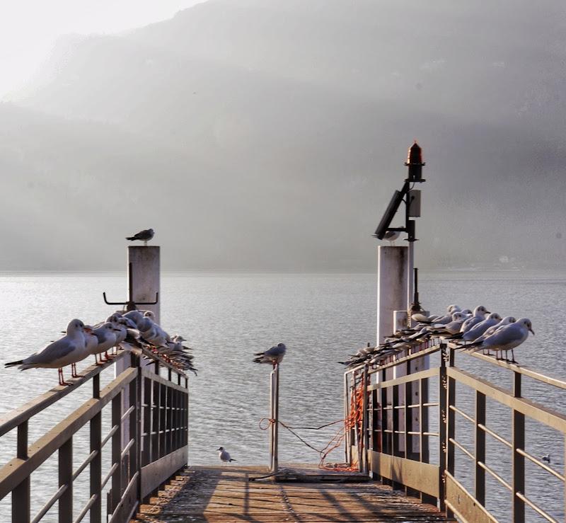 In attesa del traghetto  di marina_foto