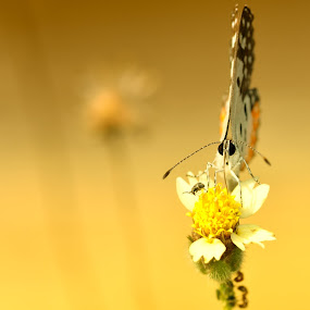 Butterfly by Manoj Kumar Kd - Nature Up Close Flowers - 2011-2013