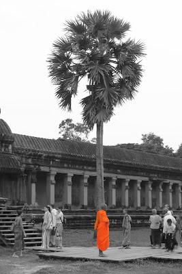 Orange monk di darioformica