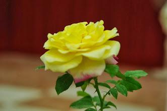 Photo: VNIPS Garden Rose