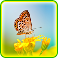 Butterfly Live Wallpaper Icon