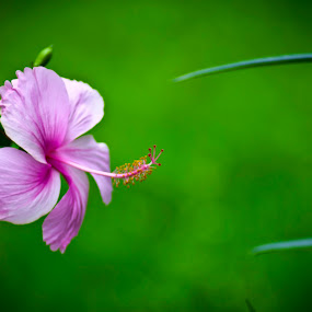 by Shashank Sharma - Nature Up Close Flowers - 2011-2013