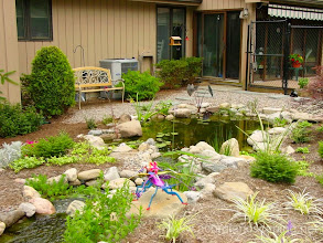 """Photo: Ecosystem #GardenPond, Waterfalls, Stream, Pond Design and Fish Pond Installation by Acorn Ponds & Waterfalls Certified Aquascape Contractor since 2004 of Rochester, NY.  Check out our website www.acornponds.com and give us a call 585.442.6373.  Here's what this Pond owner had to say about Acorn Ponds & Waterfalls: """"Tom Warmerdam truly loves what he does & is extremely enthusiastic about ponds and streams. He is very knowledgeable & shares information so others will be successful pond owners. His standards and quality of work are excellent."""" Pam W.  Acorn Ponds & Waterfalls of Rochester NY, 585-442-6373, is a Certified Aquascape Contractor, #LandscapeDesigner, Outdoor Lighting Designer, Installer, Builder, Contractor and Design Service Company from Rochester, NY. We have professional Installation and Design Services available for the following: Landscape Design Outdoor Room Design Backyard Ponds and Waterfalls Design & Construction Patios and Walkways: Paver, Stone, Brick Low Voltage Landscape Lighting LED Landscape Lighting Swimming Ponds Ecosystem Ponds LED Outdoor Lighting Retaining Walls Fountains Water Features Pondless Waterfalls Pond Maintenance and Design Aquatic and Under Water LED Lights Bubbling Boulders and Urns Natural Stone Patios and Rock Gardens Garden Ponds Outdoor Kitchens Pizza Ovens Fire Pits Fish or Koi Ponds Waterfall Ponds Low Maintenance Plantings Commercial Landscape Design Residencial Landscape Design Drainage Issues, Solutions Aquascape Rainwater Collection Systems  We serve Pittsford NY, Penfield NY, Brighton NY, Fairport NY, Webster NY, Greece NY, Victor NY, Henrietta NY, Irondequoit NY, Rush NY.  To learn more about Acorn Pond & Waterfalls Services, please click here: www.acornponds.com/services.html  Click here for a free Magazine all about Ponds and Water Features: http://flip.it/gsrNN  Sign up for your personal design consultation here: www.acornponds.com/contact-us.html  Acorn Ponds & Waterfalls  585.442.6373 www.acornponds.c"""